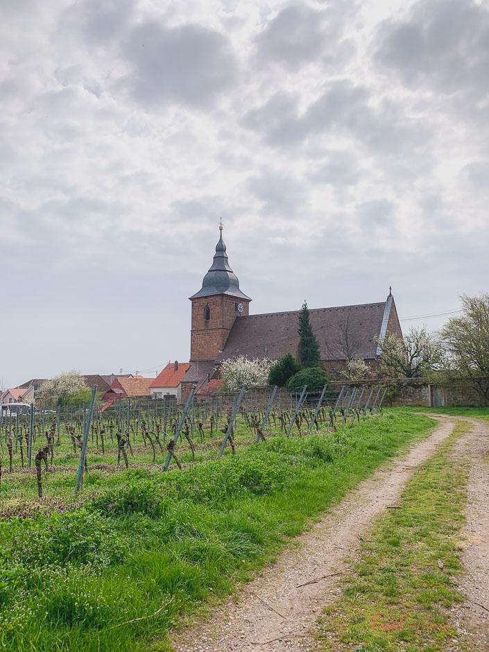 Weinbergswanderung in der Pfalz