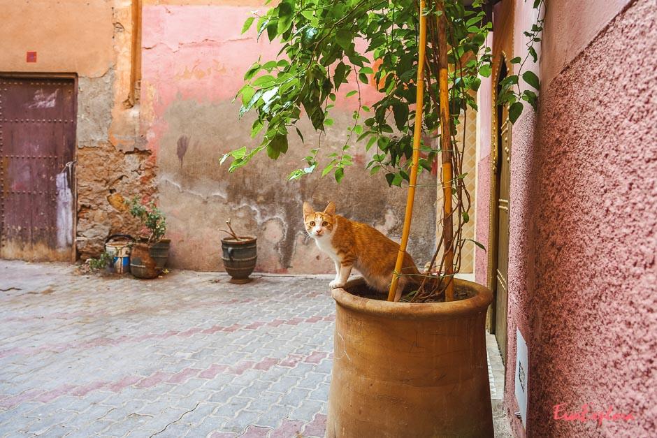 Katzen in Marokko