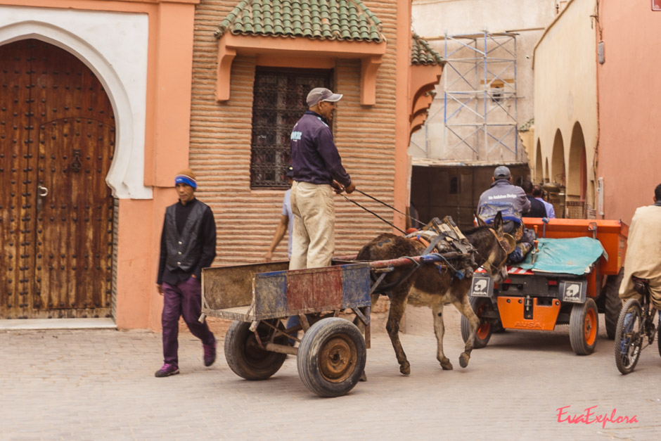 Reiten in Marrakesch