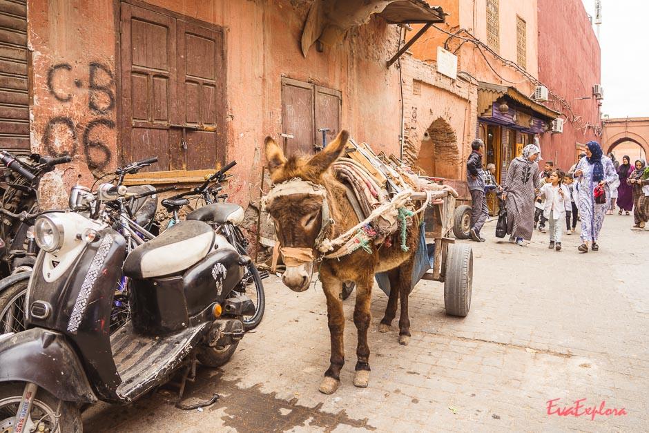 Marrakeschbilder