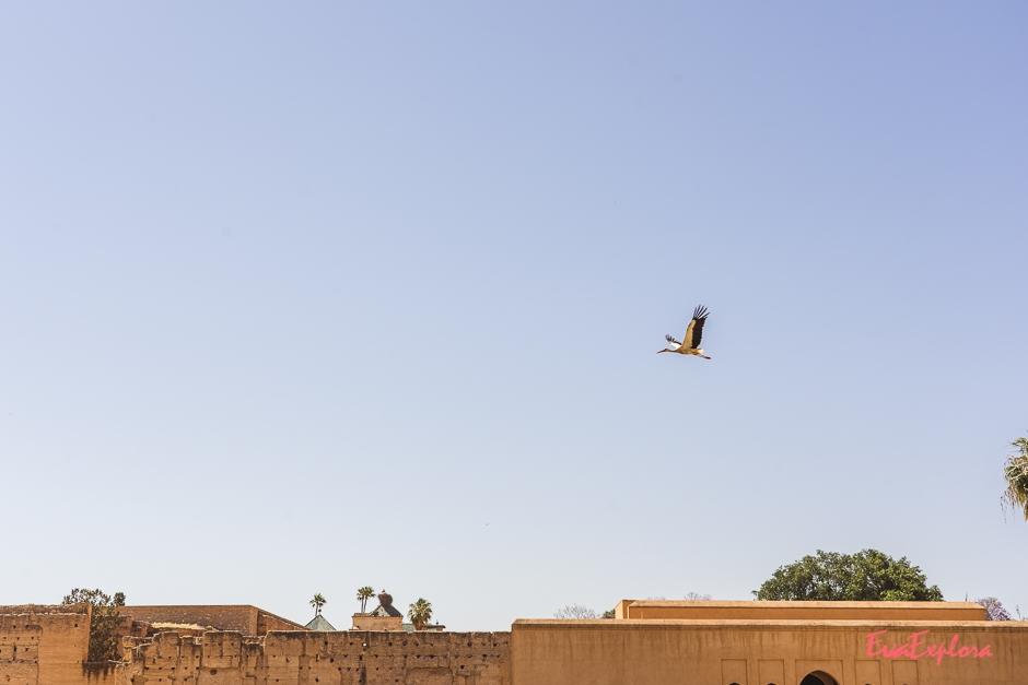 Ausflugstipps fuer Marrakesch
