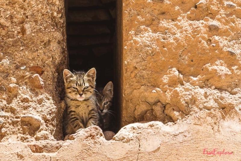 Cat Content Marokko