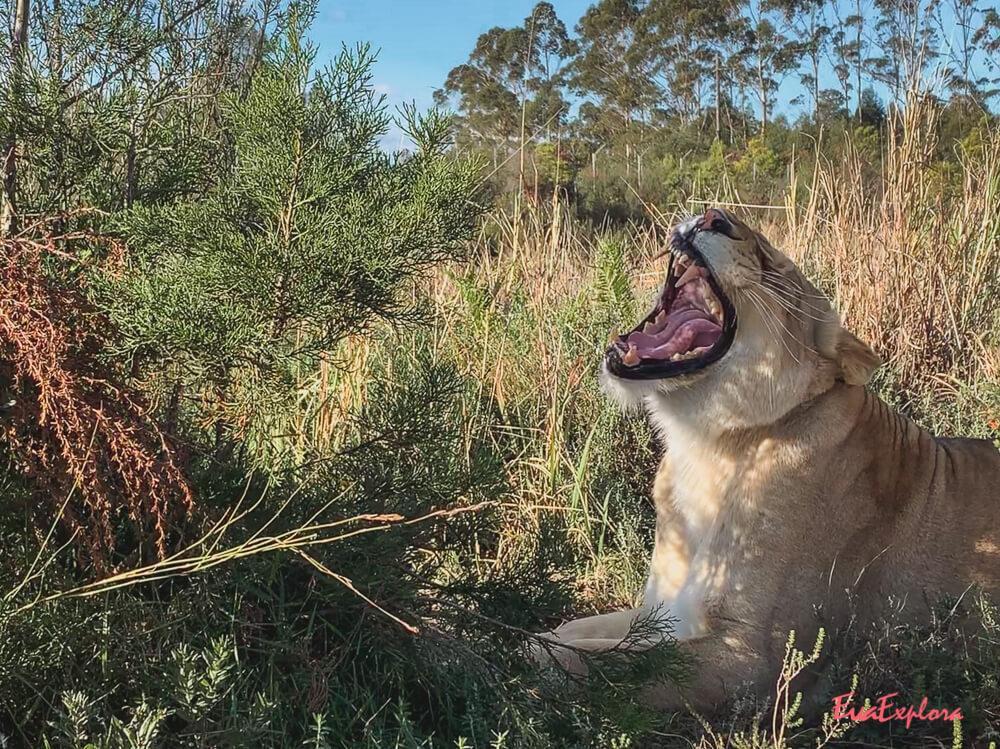 Safari in Suedafrika