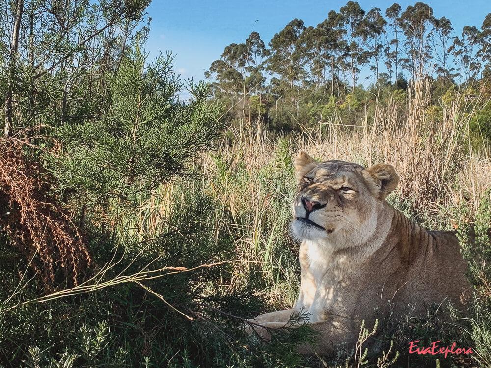 wilde Tiere Suedafrika