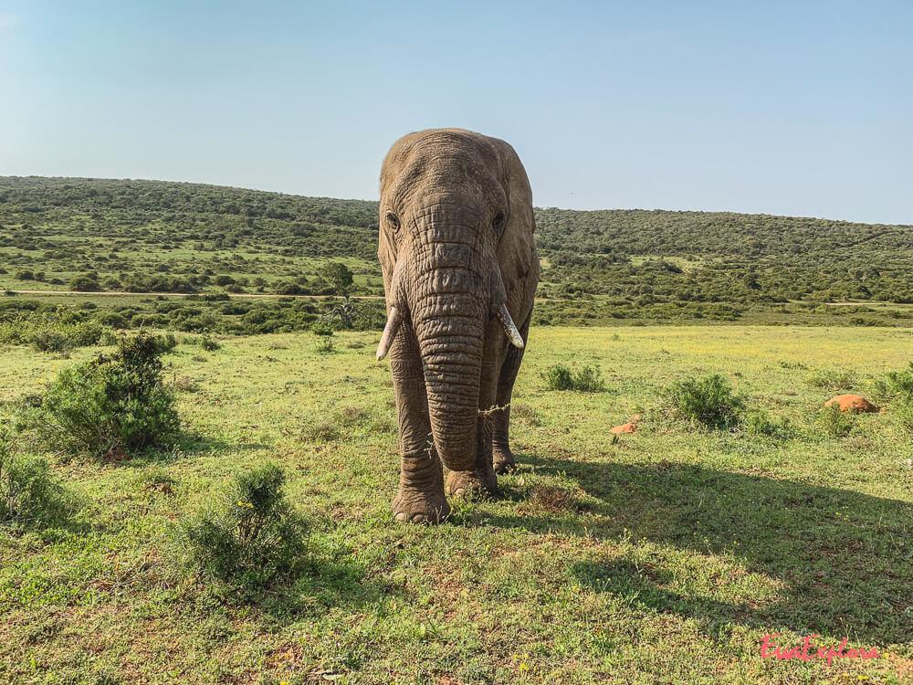 shotoniphone Safari