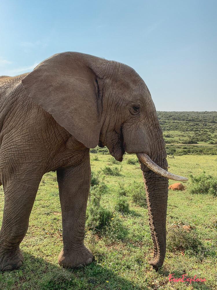 Elefanten Safari Addo