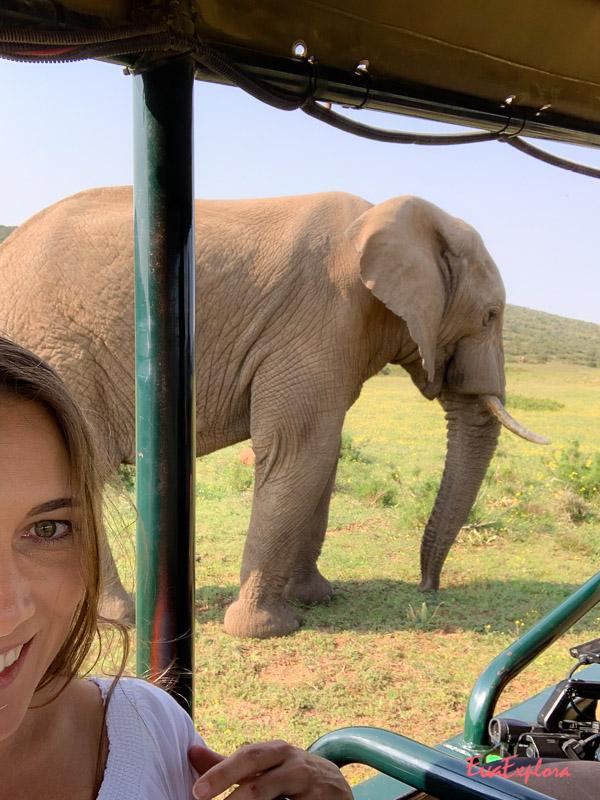 Elefanten-Selfie Suedafrika