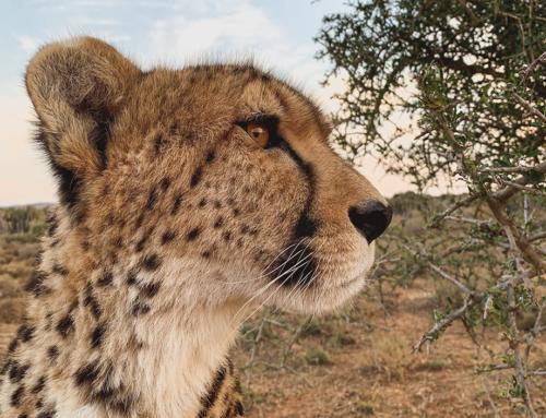 Fotografieren mit dem iPhone: unterwegs in Südafrika