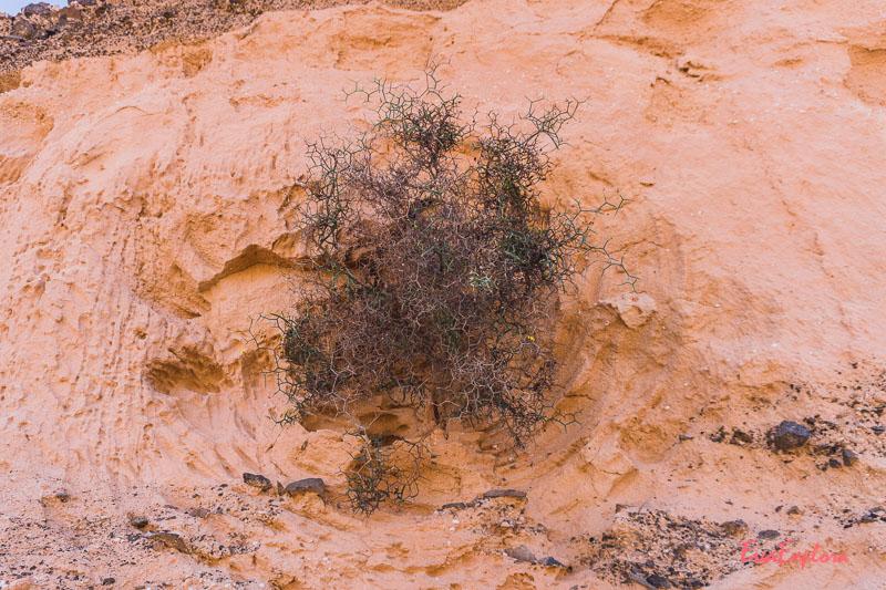 Busch in der Mondlandschaft