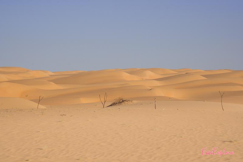 Wueste in Mauretanien