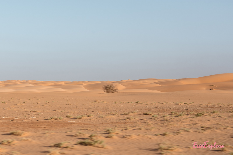 Vegetation in Mauretanien