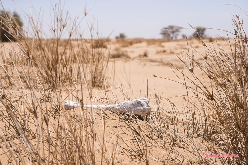 Knochen in der Wüste