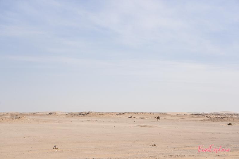 Wüste und Kamel