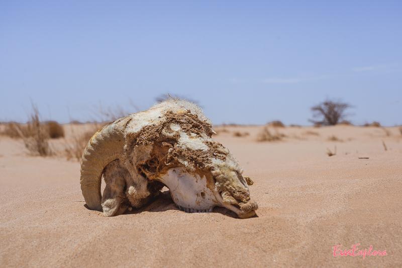 Überbleibsel in der Wüste