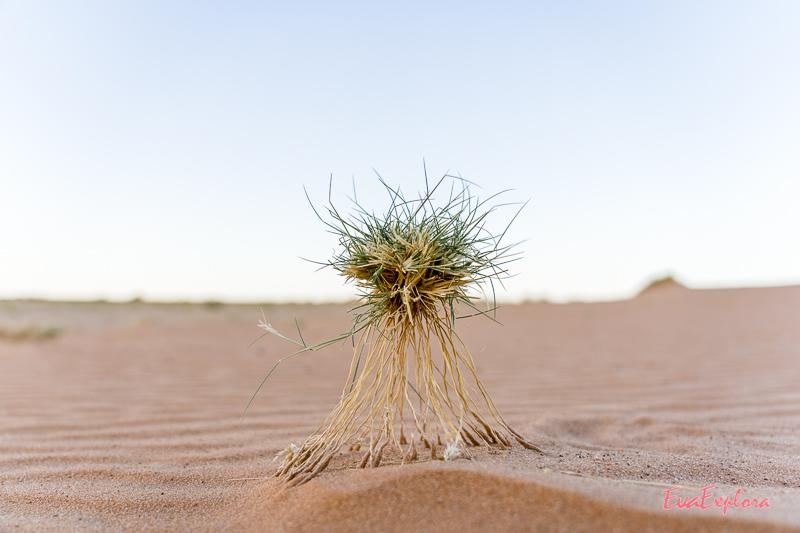 Sahara Wüstentour