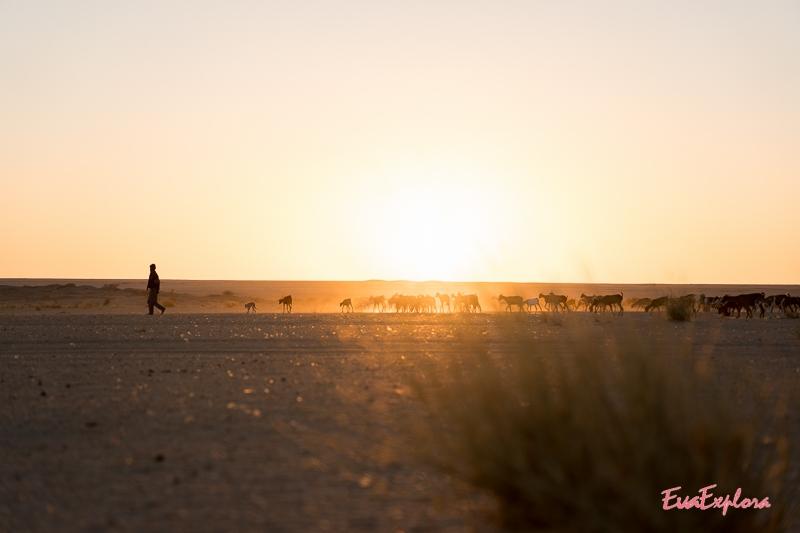 Reisen durch Mauretanien