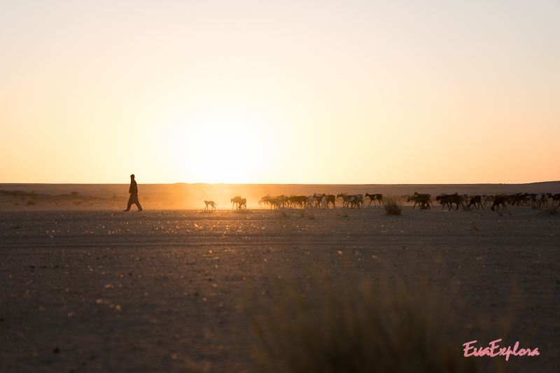 Reisen in Mauretanien