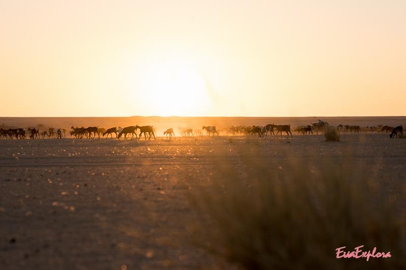 Ziegen im Sonnenuntergang