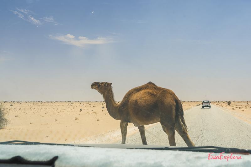 gefährlich Autofahren Mauretanien